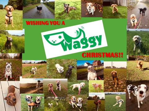Waggy Tails of Wymondham: Waggy Christmas