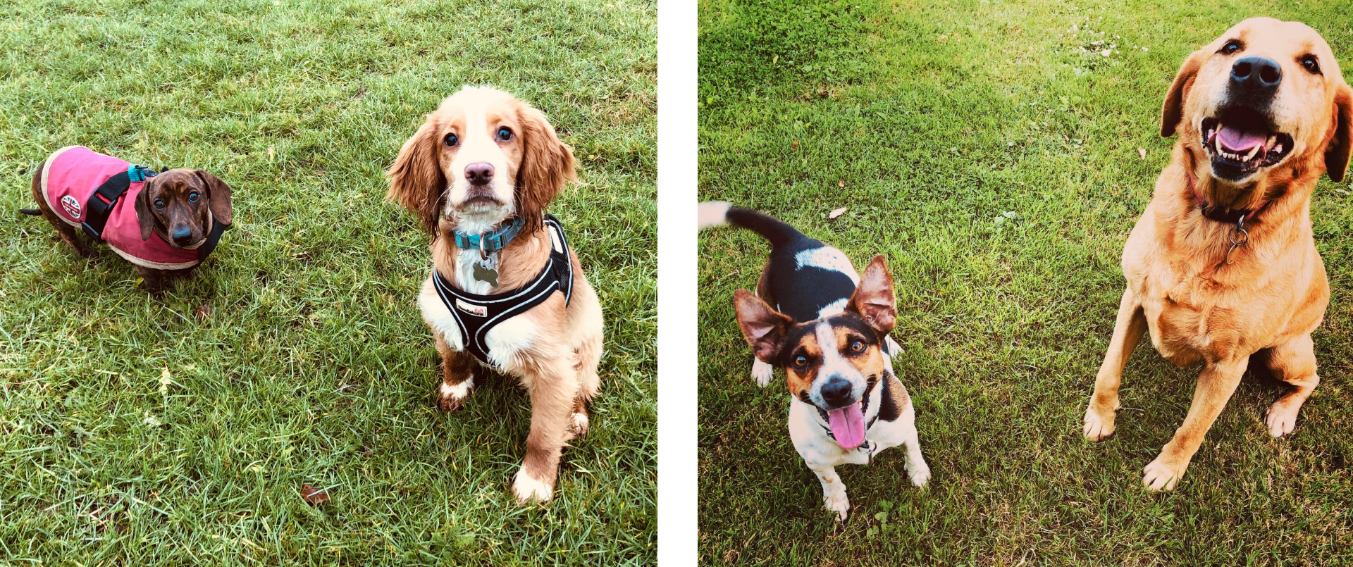 Waggy Tails of Wymondham: Dave & Trixi and Dot & Toast