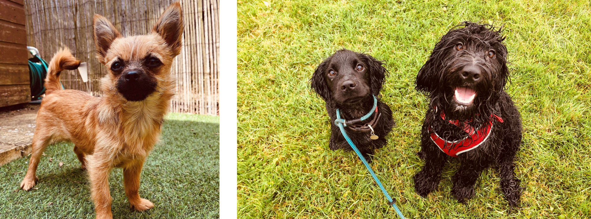 Waggy Tails of Wymondham: Meeka and Odin & Ainsley